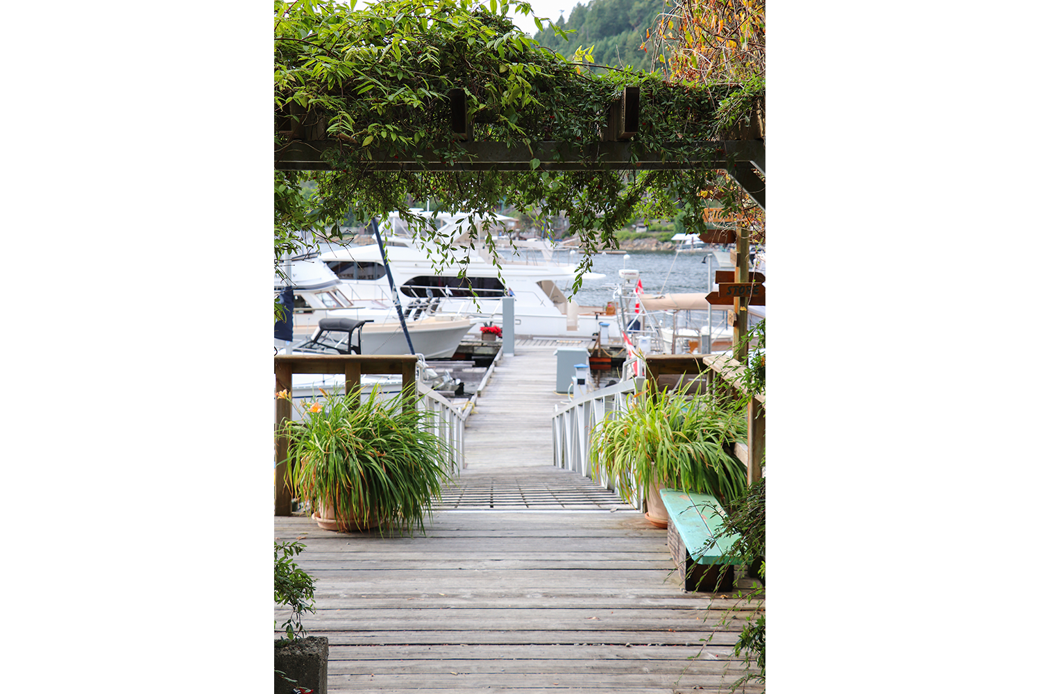 Gardens on the Marina Dock at John Henry's Marina & Resort Moorage with two boats and Pender Harbour in the background.
