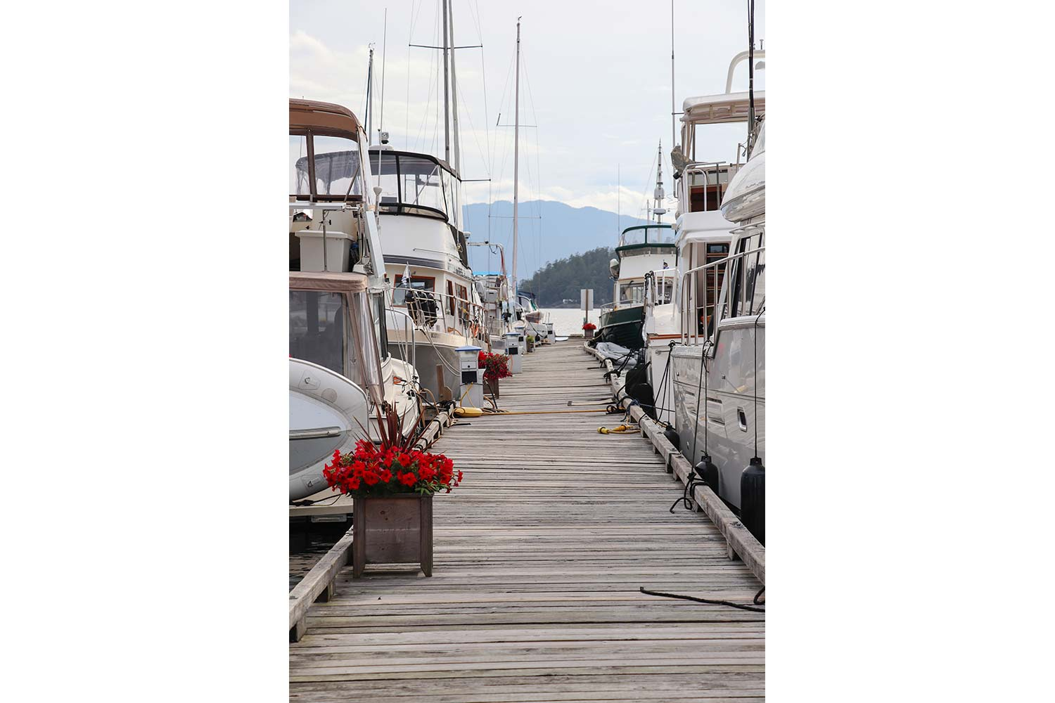 Boats moored up on either side of the Dock at John Henry's Pender Harbour Boat Moorage.