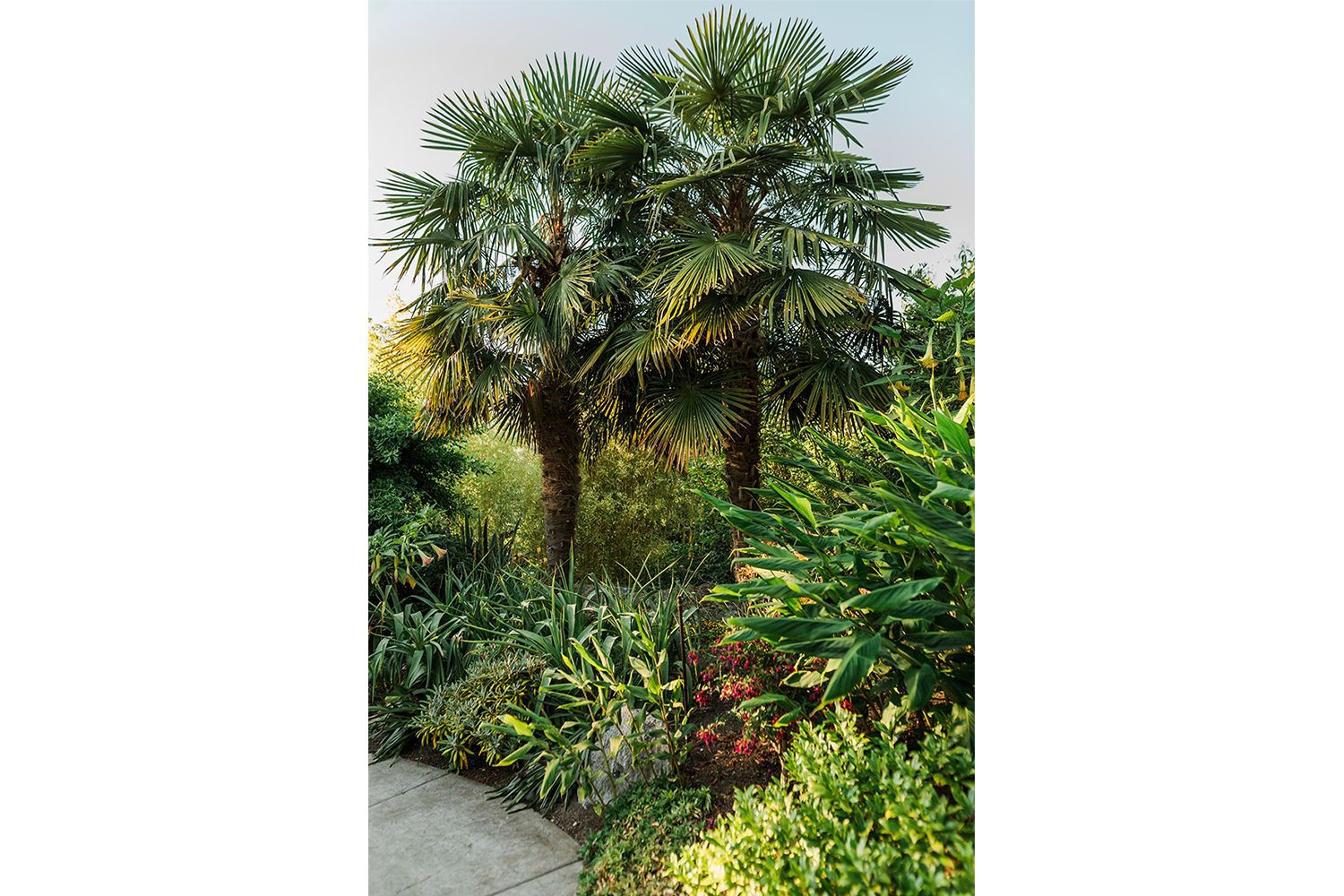 Two palm trees in the abundant garden at this Pender Harbour accommodation at John Henry's Marina and Resort.